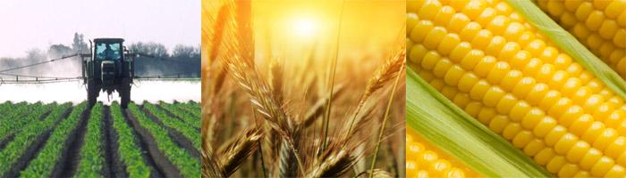 加拿大高产量农场