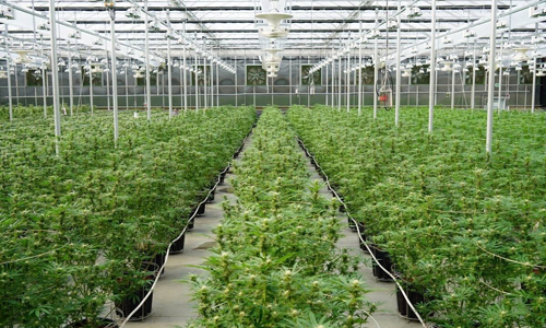 Ontario Greenhouse for sale
