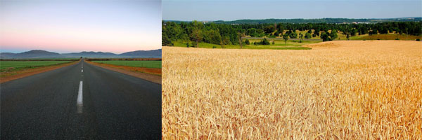 加拿大大面积农场