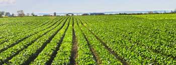 crop farm, investment immigrant, big farm