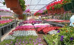 CCAGR,加拿大农场,加拿大移民,投资加拿大,加拿大花卉中心