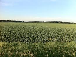 CCAGR,加拿大农场,加拿大移民,投资加拿大