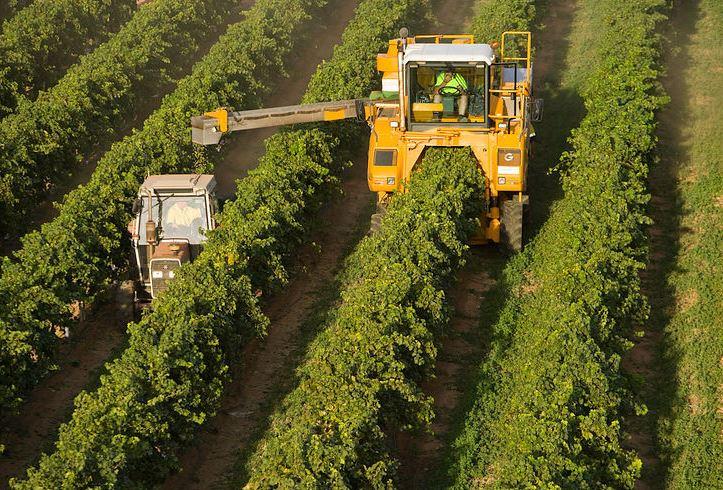 CCAGR,加拿大农场,加拿大移民,投资加拿大, 加拿大葡萄农场