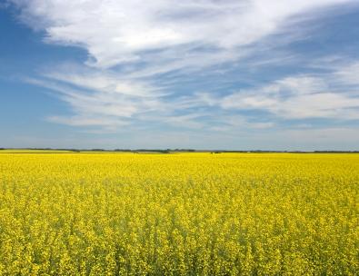 CCAGR,加拿大农场,加拿大移民,投资加拿大, 加拿大大面积农场