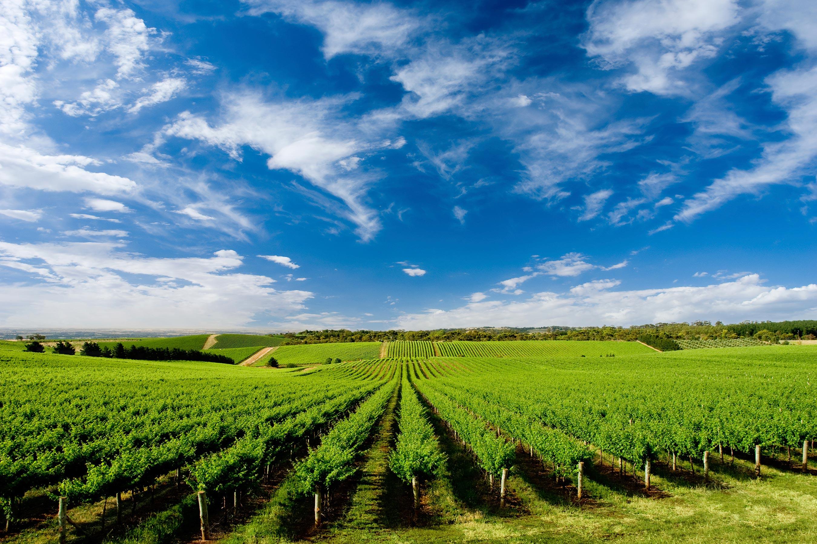 CCAGR,加拿大农场,加拿大移民,投资加拿大, 加拿大葡萄庄园