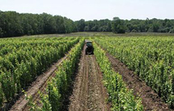 CCAGR,加拿大农场,加拿大移民,投资加拿大, 加拿大葡萄酒庄