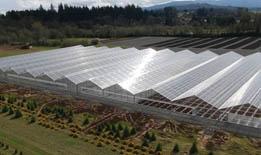 CCAGR,加拿大农场,加拿大移民,投资加拿大, 加拿大蔬菜温室农场