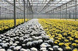CCAGR,加拿大农场,加拿大移民,投资加拿大, 加拿大温室农场