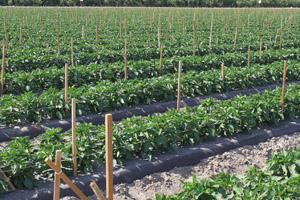 CCAGR,加拿大农场,加拿大移民,投资加拿大, 加拿大大面农场
