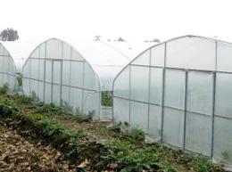 CCAGR,加拿大农场,加拿大移民,投资加拿大, 加拿大葡萄园