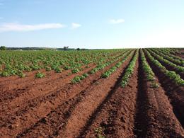 CCAGR,加拿大农场,加拿大移民,投资加拿大, 起步农场
