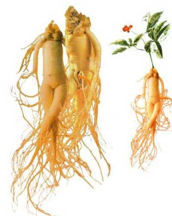 Canadian ginseng investment