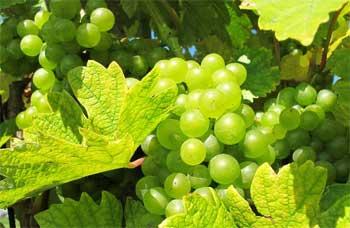 加拿大葡萄园,葡萄庄园出售