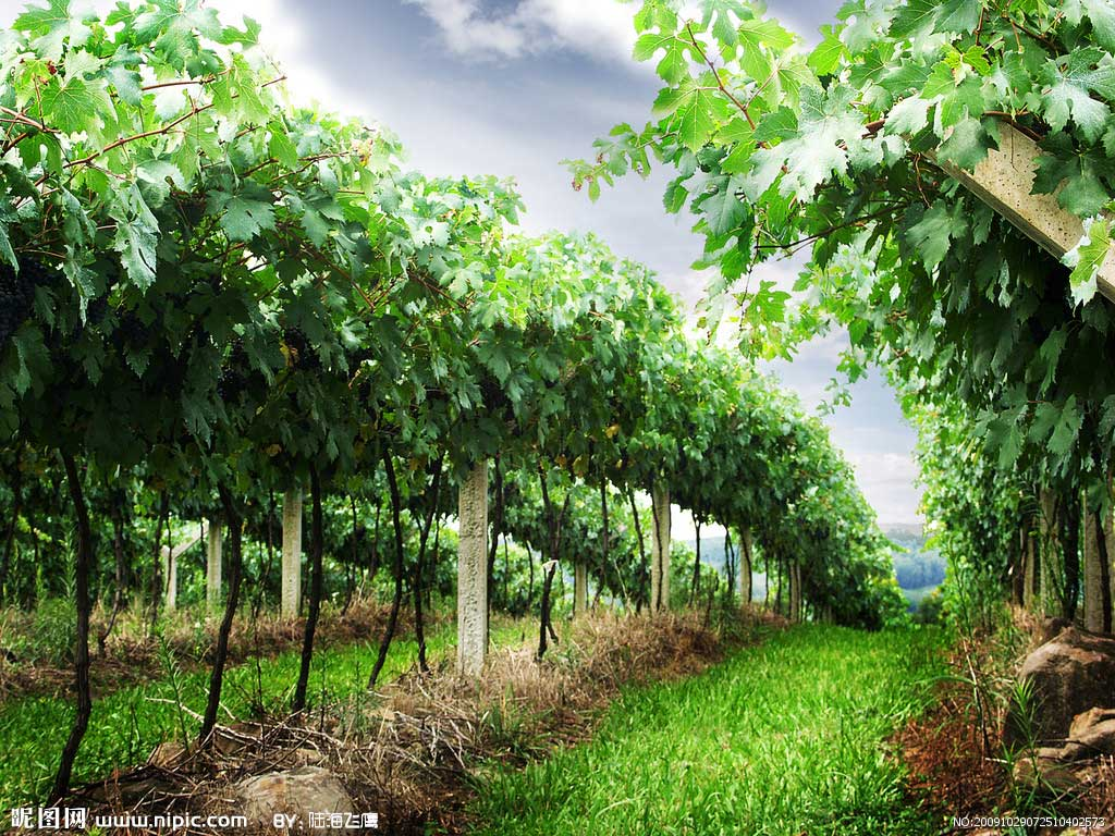 加拿大农场;加拿大酒庄;葡萄园